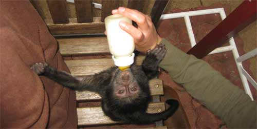Oyster Worldwide volunteer feeding a monkey