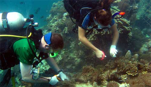 Conservation work on a coral reef