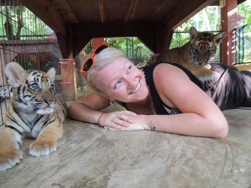 Taking in a tiger temple in Chiang Mai, Thailand, on my career break