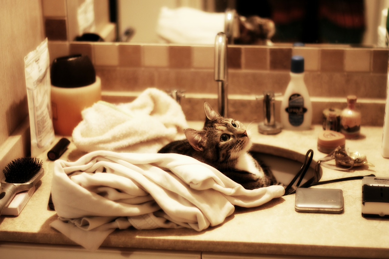 Cat in sink - image from pixabay