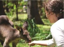 Hand feed Australia's most well known locals