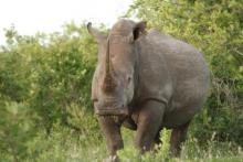 African Conservation Experience rhino wildlife conservation
